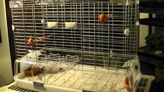 Vision Bird Cage Review