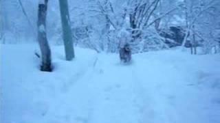 バーディーと2008年お正月に妙高、斑尾に雪遊びに行ってきました。