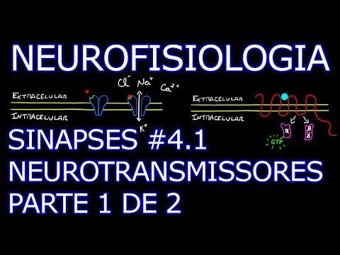 Aula: Neurofisiologia - Sinapses #4.1 - Neurotransmissores (1/2) | Neurofisiologia Humana