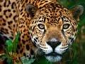 Peru in my eyes Travel and Discover with SylwiaTravel - Polskie biuro podróży w Peru
