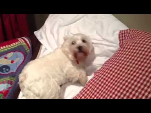 Dogs Who Don't Want to Go to Bed Compilation | Doovi