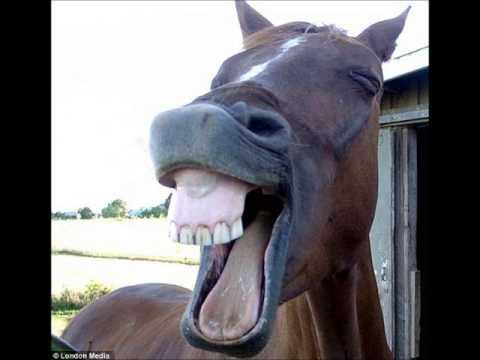 nitrito cavallo