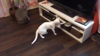 Новый кошачий друг