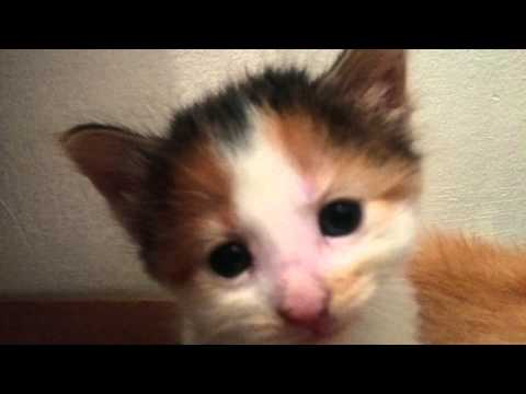 Kittens eat solid food first time