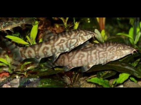 Мой аквариум, чем кормлю и делюсь своим опытом...канал SID tv