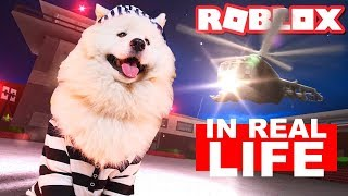 Dog Escapes ROBLOX Jail and Box Fort: Roblox JAILBREAK In Real Life - Part 1