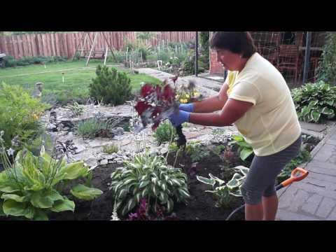 Огород » Садовод и Огородник