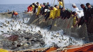 Here is Big Catch Fishing!! You Won't Believe That How Many Fish, Amazing Big Catch in The Sea
