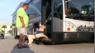 Southeastern Guide Dog Training Exercise