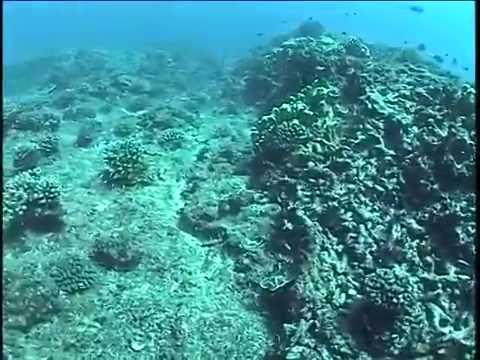 Scuba Diving - Jarvis Island