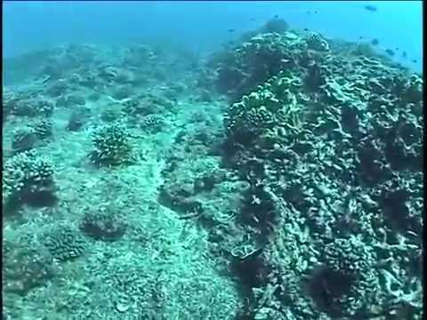 Scuba Diving - Jarvis Island