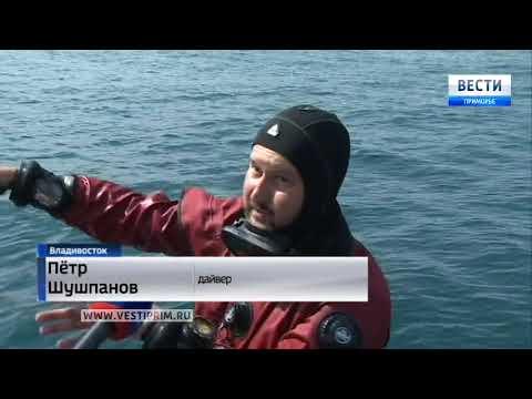 Зверский промысел обнаружен на островах недалеко от Владивостока