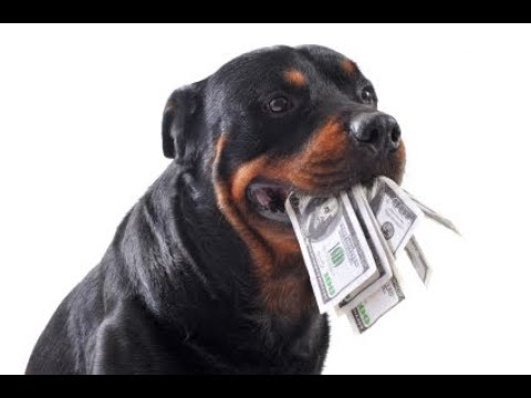 Top 10 MOST EXPENSIVE DOG BREEDS 2017 - 2018 (Affordable?)
