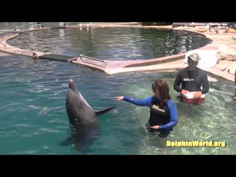 Swimming with Dolphins Marco Island Tour