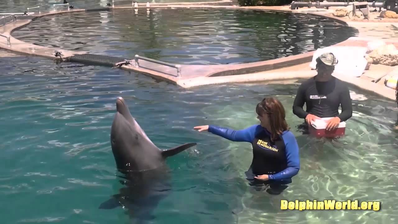 Swimming with Dolphins Marco Island Tour - YouTube
