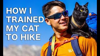 How to Train your Cat for hikes