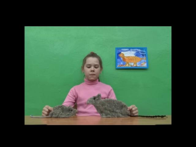 Изображение предпросмотра прочтения – ДарьяСмирнова читает произведение «Мышь и Крыса» И.А.Крылова