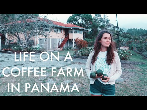 Living on a coffee farm in Panama | Tour
