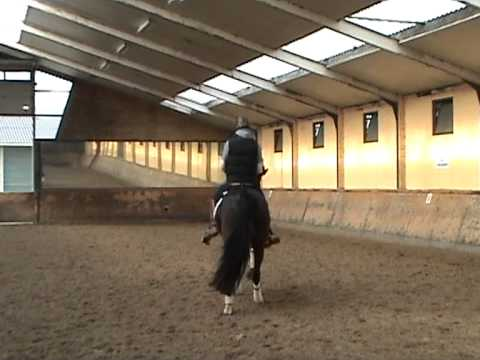 Edward Gal and Moorlands Asther de Jeu training canter feb 2011