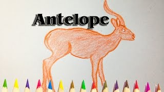 How to Draw an Antelope - We Draw Animal Step by Step - SLD
