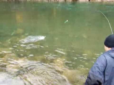 Steelhead Fishing On The Zymoetz (Copper) River