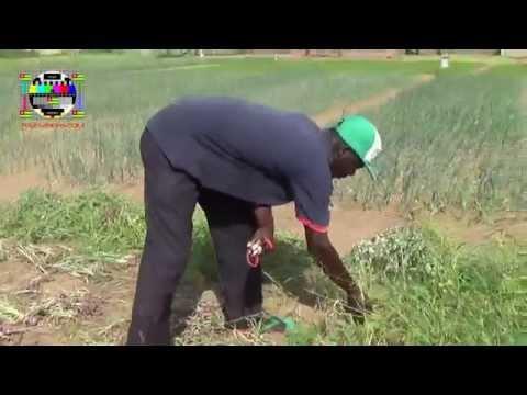 Profession agriculteur: il faut beaucoup de capitaux pour démarrer