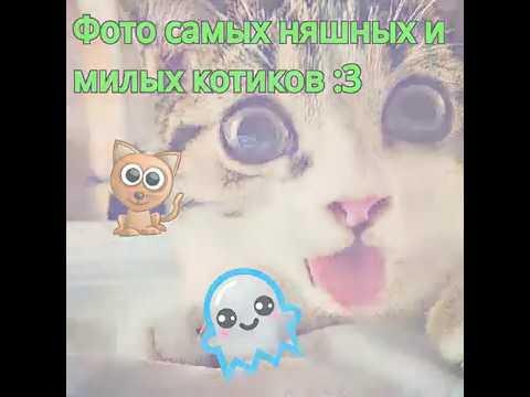 ♡ Фото самых няшных и милых котиков ♡