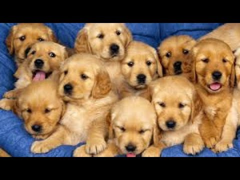 Best Funny and Cute Puppy Videos Compilation 2017 -Cute Overload