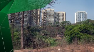 Une lutte pour l'avenir de la forêt d'Aarey, le poumon de Mumbai