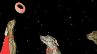 funny dogs play keep away in space plus the rings of saturn
