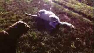 Moment Of Mindfulness Dog Daze