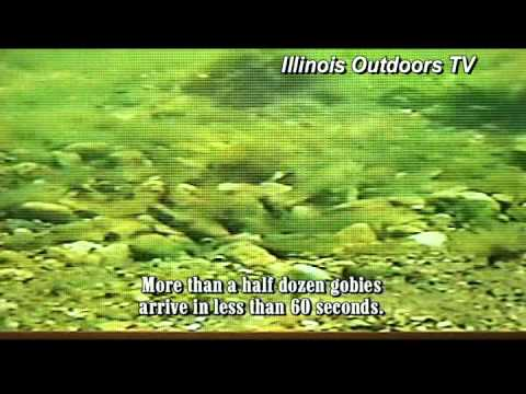 Outdoor News from the IL DNR with Smallmouth Bass Video