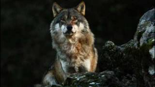 CHEYENNE - Dances Of the Wolf