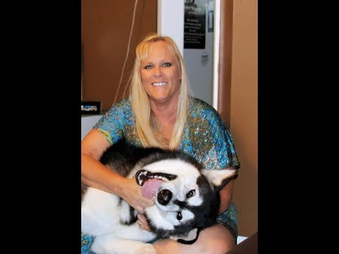 Get to know Tonka The Alaskan Malamute's Momma  Better !!