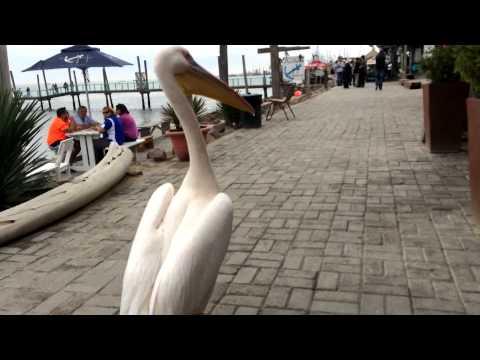 Pelican Shenanigans