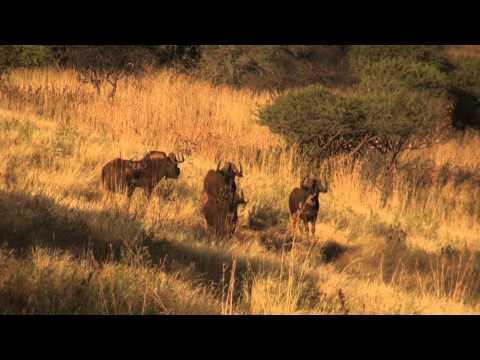 Piet Otto Safaris