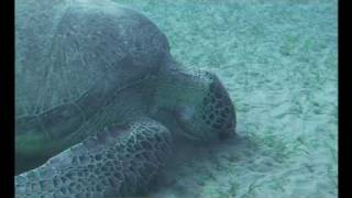 SWCC, Sea Turtle Documentary