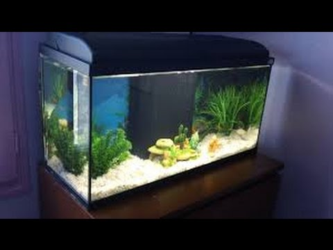 Un aquarium qui tombe du haut d 39 une maison youtube for Aquarium maison