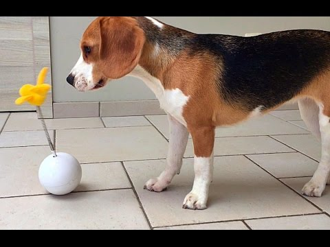 Silly Dogs Get To Play With Cat Toys! Funny Reactions