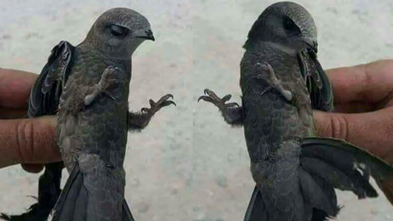 Viral Penampakan Burung Ababil Hewan Perkasa yang