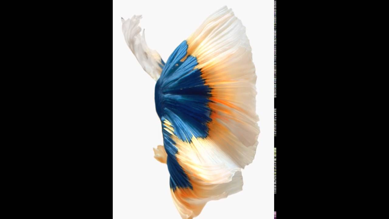 Wallpaper iphone fish - Wallpaper Iphone Fish 46