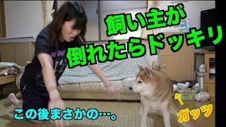 【犬にドッキリ】飼い主が倒れたら…すごい展開に…。 大関れいか 検索動画 15