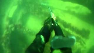 spearfishing new england