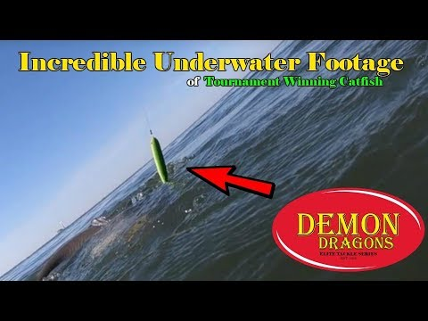 Most insane underwater Demon Dragon Footage ever with a Monster Catfish in  Tow !!!