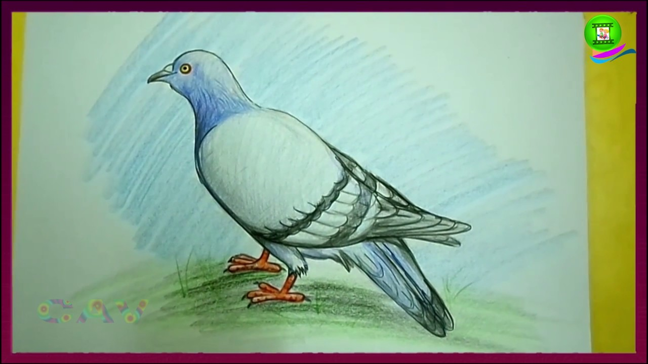 How To Draw Pigeon Easy Step By Step Children Drawing Art