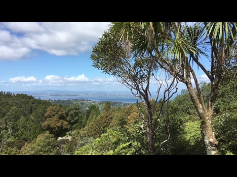 Living Amongst Nature in Auckland, New Zealand - Timelapse