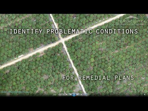 UAV & GIS Mapping For Oil Palm Plantation
