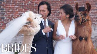 Meet Portland's Viral Wedding Llamas   BRIDES
