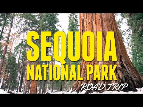 Road Trip To Sequoia National Park