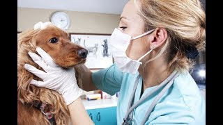 Профессия ветеринар. Видео доклад.